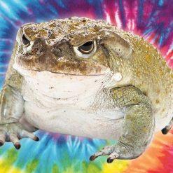 Buy Bufo Bufo Toad Venom
